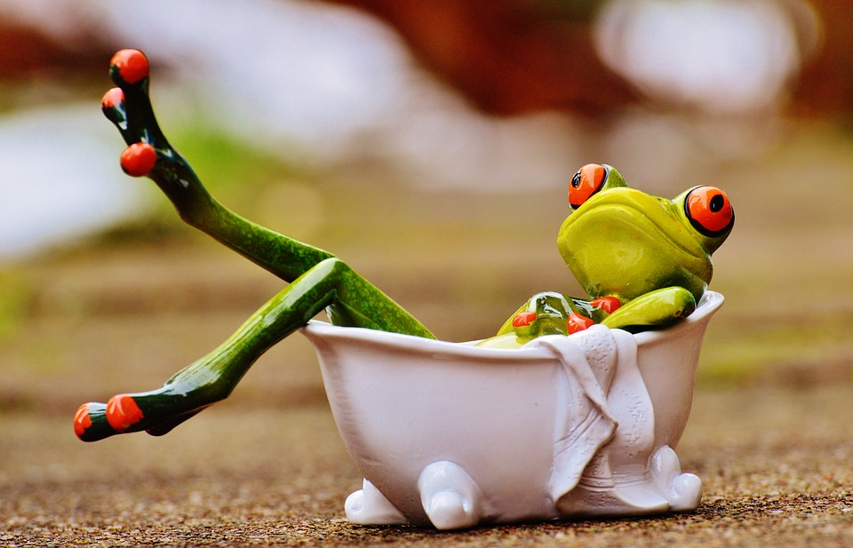 frog-1159370_960_720